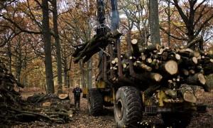 Débardage du bois coupé en forêt de Rambouillet. © Juliette Robert/Youpress