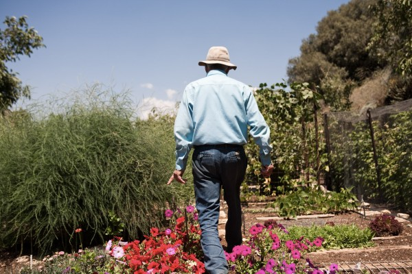 Shmuel, 76 ans, d'origine française, rescapé pendant la seconde guerre mondiale, en se cachant dans la forêt et en faisant pousser des plantes. Il s'est occupé des vergers de Sasa pendant des décennies. Ici il montre son jardin, où il fait pousser d'innombrables espéces de fruits et légumes. © Juliette Robert