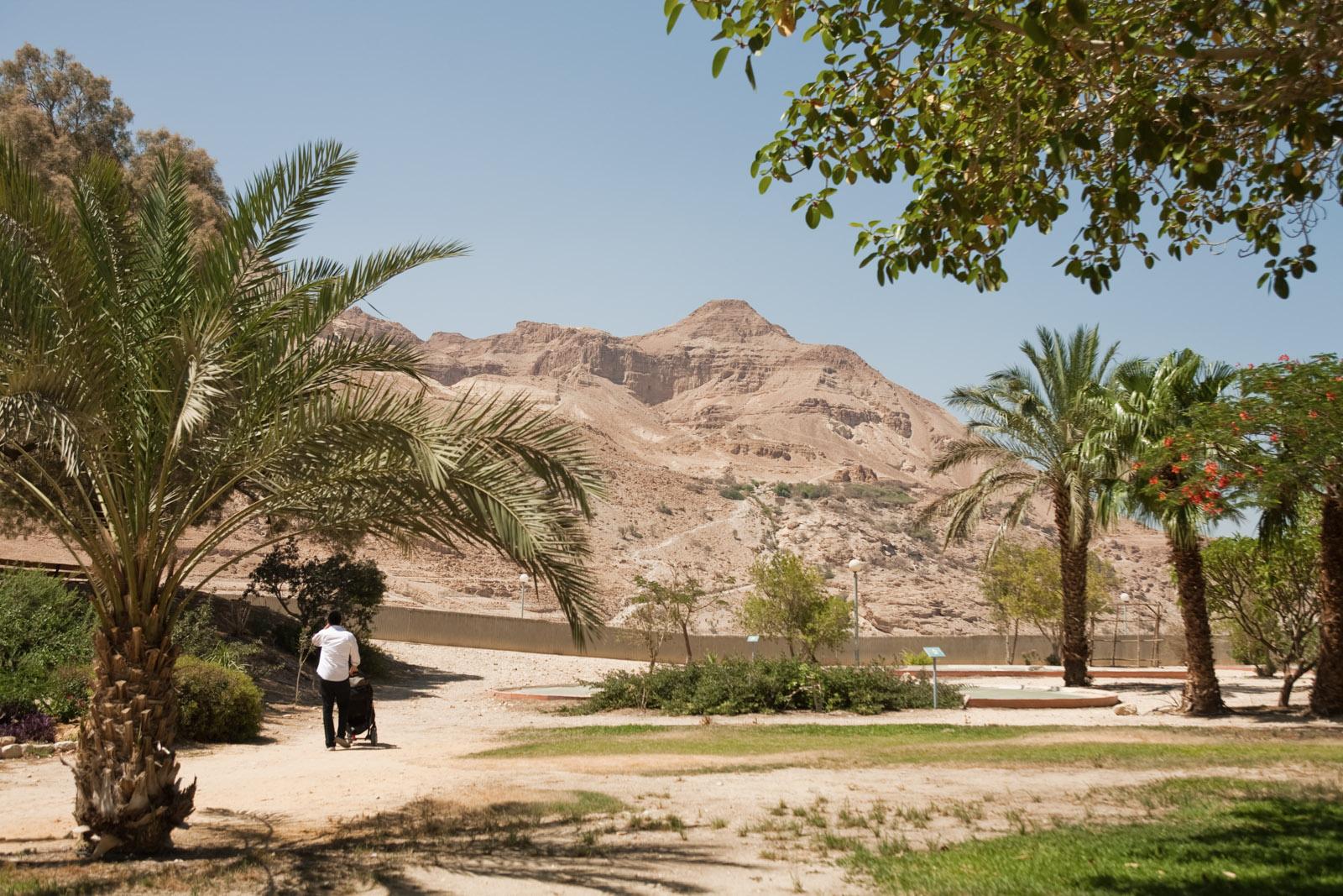 Dans le complexe hôtelier du kibbutz Ein Guedi, près de la Mer Morte.