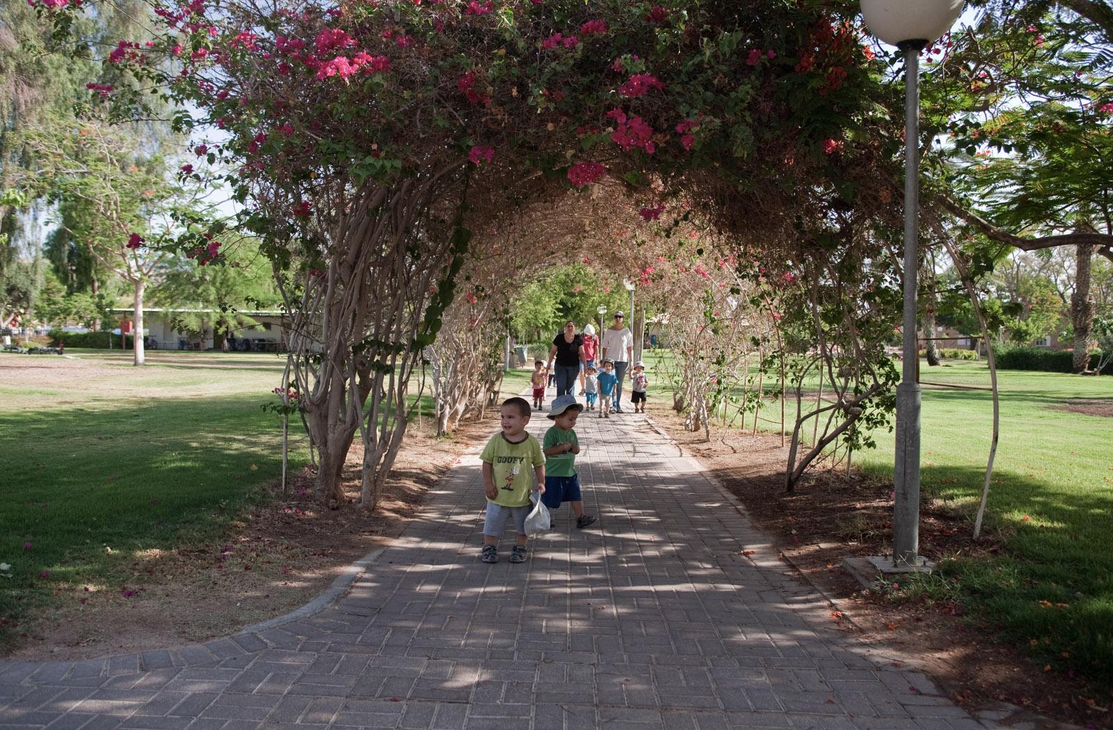 Le matin, les enfants font une promenade à travers le kibbutz