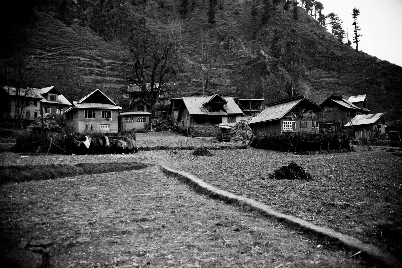 Timber, north Kashmir