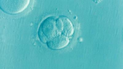 Un embryon ©Elena Kontogianni/Pixabay